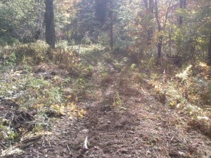 The start of the trail off the Tin Shanty Road going to the groomer shed. Sept. 29, 2013.
